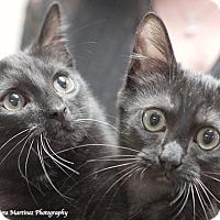 Adopt A Pet :: Smokey and Bandit - Marietta, GA