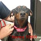 Adopt A Pet :: Alanna
