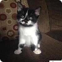 Adopt A Pet :: Diego - Cutie! - Huntsville, ON
