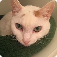 Adopt A Pet :: Marianne - Worcester, MA