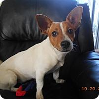 Adopt A Pet :: skye - haslet, TX