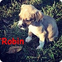 Adopt A Pet :: Robin - Mobile, AL