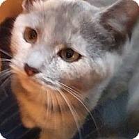 Adopt A Pet :: Sophie - Jerseyville, IL