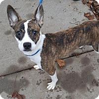 Adopt A Pet :: Hustle - Princeton, MN