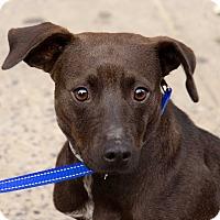 Adopt A Pet :: Leeza - New York, NY
