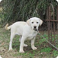 Adopt A Pet :: CARSON - Bedminster, NJ