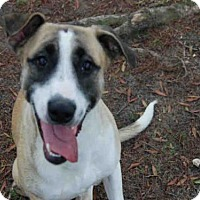 Adopt A Pet :: ARCADIA - Panama City, FL