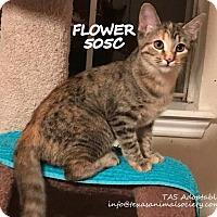 Adopt A Pet :: Flower - Spring, TX