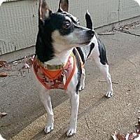 Adopt A Pet :: Mario - O'Fallon, MO