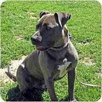 Adopt A Pet :: Remi - Petaluma, CA