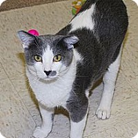 Adopt A Pet :: Diamond - Lincoln, NE
