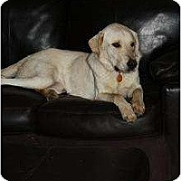 Adopt A Pet :: Jed - Hagerstown, MD