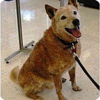 Adopt A Pet :: Gator - Phoenix, AZ