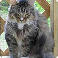 Adopt A Pet :: I may not be perfect but.... - Elkton, MD