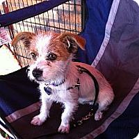 Adopt A Pet :: Newton - North Hollywood, CA