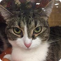 Adopt A Pet :: Oakley - Monroe, GA