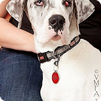 Adopt A Pet :: Gandalf - Albuquerque, NM