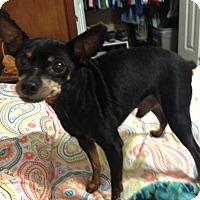 Adopt A Pet :: Poncho - Homewood, AL