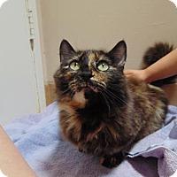 Adopt A Pet :: Sassy - Richmond, CA