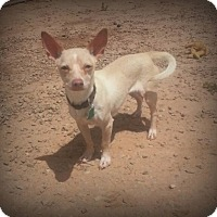 Adopt A Pet :: Clowny - Alamogordo, NM