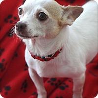 Adopt A Pet :: Leon - san diego, CA