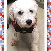 Adopt A Pet :: Adopted!! Owen - NY - Tulsa, OK