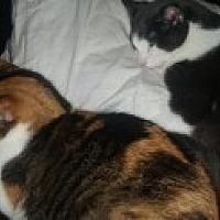 Adopt A Pet :: Sissy - Livonia, MI