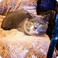 Adopt A Pet :: Samson - Atlanta, GA