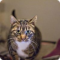 Adopt A Pet :: Boots - Lincoln, NE
