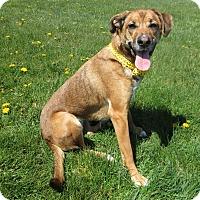 Adopt A Pet :: NAOMI - New Cumberland, WV