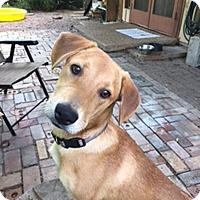Adopt A Pet :: Fin - Austin, TX