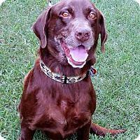 Adopt A Pet :: Gumbo - Coppell, TX