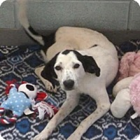 Adopt A Pet :: Anna - Avon, NY