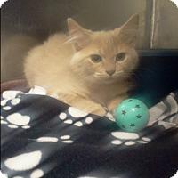 Adopt A Pet :: fawn - Muskegon, MI