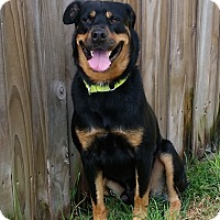 Adopt A Pet :: Junior - Seffner, FL