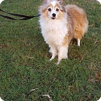 Adopt A Pet :: Maxey - Verona, NJ