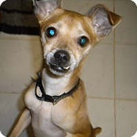 Adopt A Pet :: Benny - West Springfield, MA