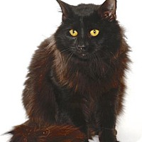 Adopt A Pet :: BISSEL - Gloucester, VA