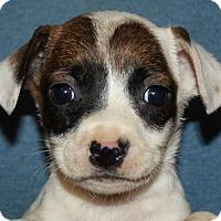 Adopt A Pet :: Lisa - Colonial Heights, VA