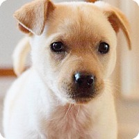 Adopt A Pet :: Kate - CUMMING, GA