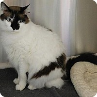 Adopt A Pet :: GATSBY - Powder Springs, GA