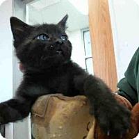 Adopt A Pet :: MING - Plano, TX