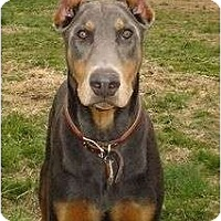 Adopt A Pet :: Jessie--adopted!! - New Richmond, OH