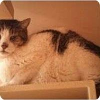 Adopt A Pet :: Benjamin - Modesto, CA