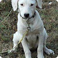 Adopt A Pet :: Libby - Staunton, VA