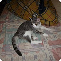 Adopt A Pet :: Tigris - Cypress, TX