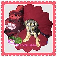 Adopt A Pet :: Rizzini Ruszkay - Lancaster, PA