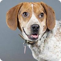 Adopt A Pet :: Boone - Fennville, MI