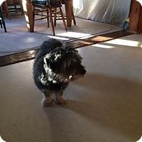 Adopt A Pet :: Sheba - Acushnet, MA