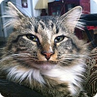 Adopt A Pet :: Baby Val - Bentonville, AR